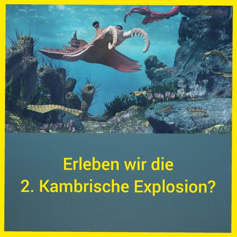 ERLEBEN WIR 2. KAMBRISCHE EXPLOSION